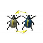 ColorChange-Beetle 1